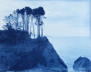 Pines/coastal erosion, Mahia 2010